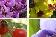 Einheimische Pflanzen im Garten | ein Klasse im Garten Workshop / image board for K.i.G. workshop 'Native Plants in the Garden'