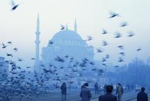 { turkey turkey } / by Felicia Greenwald