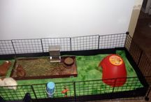 Piggies / The care and keeping of guinea pigs