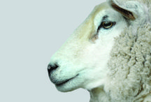 Natural New Zealand Wool Rugs / Natural wellbeing for you and your home.