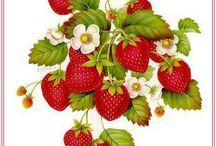 gyümi