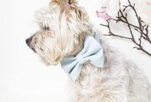 Wedding Collection for Dogs and Cats