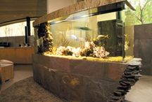 akváristik