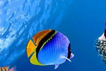 underwater-水中