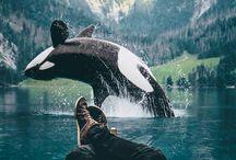 Adventure ↟
