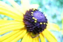Flowers from my garden - Part 2