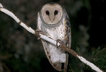 OWL inspiration. / A collection of beautiful photos of owls. Whoooooooo!
