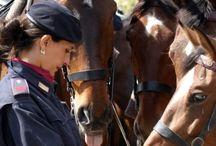 Polizia di Stato / http://www.hdtvone.tv/videos/2015/02/09/adotta-un-cavallo-della-polizia