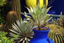 jardin Majorelle  : Marrakech