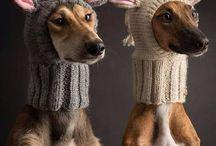 Hunde Mützen