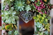 Succulent inspiration / Loving all the ideas you get to do with succulents