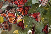butterfly farfalle & ladybug et dragonfly