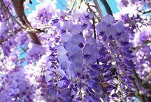 Color my World-  Purple