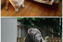 sevimli yaratıklar