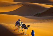 Desiertos del planeta, oasis y las formas de vivir en ellos. / Origen de los desiertos y formas de supervivencia.