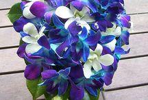 flowers / Kukat