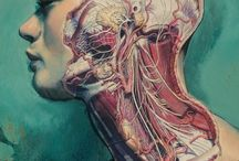 medical sketh