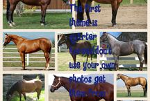 Horse photo competition rp / Not your own photos 3 pin per theme