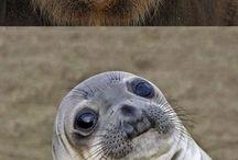 Viral Animal Photos