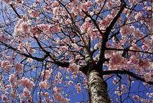 Belles journées de printemps