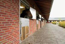 Kleiklinkers en paarden // Pavés en terre cuite et des chevaux