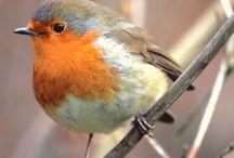 Ptáčci / Birds