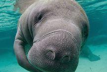 Ocean Mammalness / Ocean Marine Mammal Cuteness