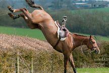 Horsey Stuff!!