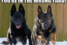 Gsd and Mali
