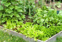 Gardening / by Heather Singler Harris