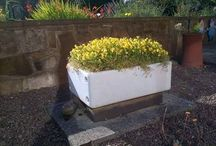#WhackyPlanters / Origin-global.com Competition in conjunction with #GradeningGap