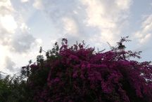 Spring sky with flowers and nice colors