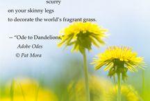 Poetry Visuals / Enjoy some beautiful excerpts of Pat Mora's poetry!