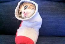 Purritos / Cats wrapped up in blankets.  What's not to love??