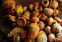 Acorns, Pinecones and Chestnuts / Acorns/Pinecones PLEASE don't repin more than 10 images in one sitting.  I appreciate your consideration. Thank you! / by Margaret Duncan Lynch