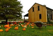 Missouri Harvest Time / The heart of the midwest allows Missourians and travelers, alike,   to experience the harvest of many fruits and veggies. Here you'll find places to pick or eat your favorite crop and have a little fun outside while the leaves turn!
