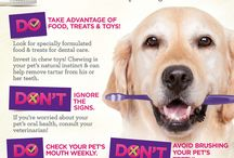 Pet Dental Care / Poor dental care means more than just bad breath - it could cause serious health problems as well - so here are some helpful tips and facts to help you keep your pets' oral hygiene up to par. / by NOVA Pets