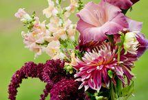 Different flowers for garden