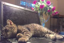 My cat Mourinho - kocour Mourin /