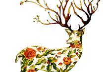 Botanical Illustration / by Kelly Daniels
