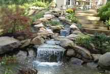 Ponds & waterfalls / by Lori Hughes