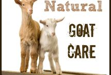 We also need goats