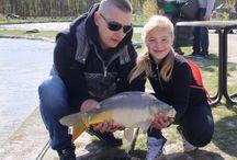 Karpervissen / Karper vissen op de visvijvers in Nederland en België