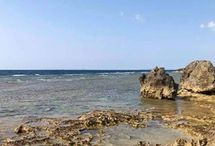 Okinawa curcuma / http://www.worldelse.com/5-bonnes-raisons-de-se-rendre-a-okinawa/