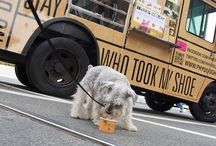Food Trucks For Dogs / Love dogs! Love anything that makes theirs and their owners' lives even more fun!
