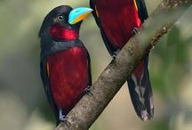 Beautious Birds / Nature In All its Glory