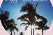 Hawaii Fun / Seek Spot's Hawaii