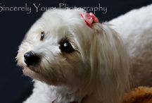 Pet Photographs / For Pets and Wild Life