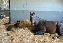 Foaling must haves
