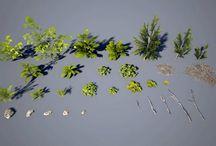 Isolated plants